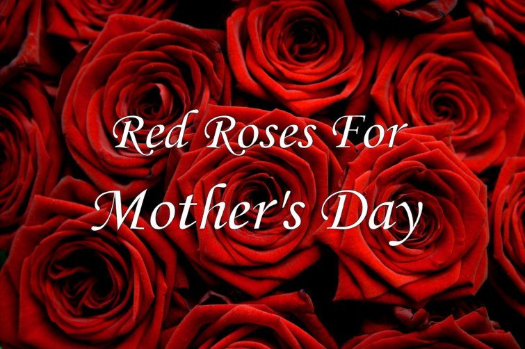 Red Roses For Mother 39 S Day