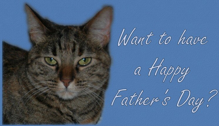 Father's Day Cat