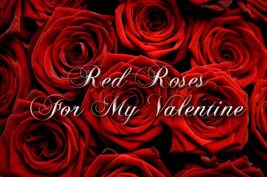 Red Roses For My Valentine
