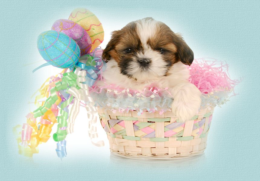 Happy Easter Video with Puppies at Play from Llerrah Ecards