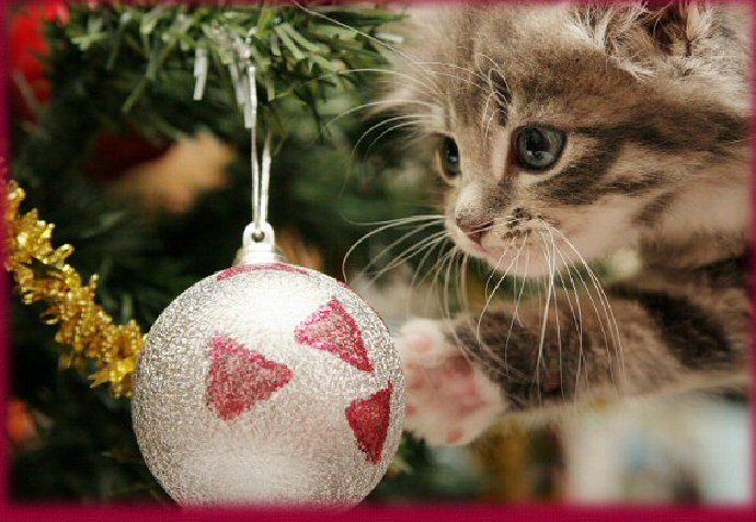 Kitten first Christmas