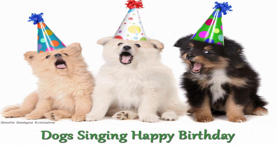 dogssinginghappybirthdayjpg – Singing Birthday Cards
