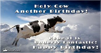 Holy Cow Another Birthday! (Postcard)