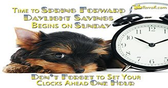 Time to Spring Forward (Postcard)